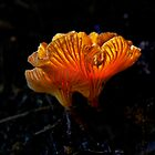 Orange Shroom by Ian English