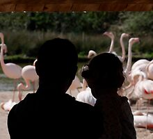 Watching the Flamingoes by buttonpresser