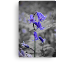 English Bluebell Canvas Print