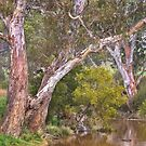 Painted Rivergums by Hans Kawitzki