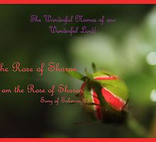 I Am The Rose of Sharon by aprilann