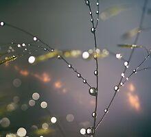 Drops of Jupiter by Tejinder Singh
