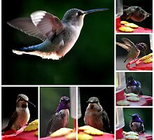 COLLAGE OF HUMMINGBIRDS NUMBER 1 by JAYMILO