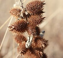Beautiful Brown Burs by Stephen Thomas