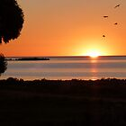 sunset & birds Pt Broughton by indiafrank