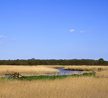 Snape Marshes  Suffolk  UK by James  Key