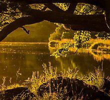 Rydal Oak by John Dunbar