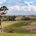 Kilmore Landscape by Pauline Tims
