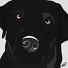 Black Labrador Retriever  by Rachel Counts
