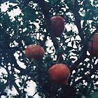 Pomegranate. by strangerandfict