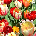 Tulips Blooms by Sunshinesmile83