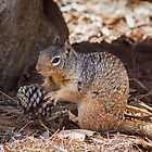 Hungry  Squirrel by BGSPhoto