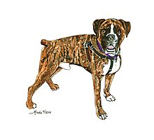Daily Doodle 25- Power - Adoptable Boxer, Boyd Photographic Print