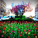 Tulips on Park Avenue by ShellyKay
