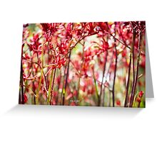 Red Kangaroo Paws Greeting Card