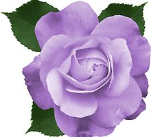 ONE FLOWER by Maria Mazhirina