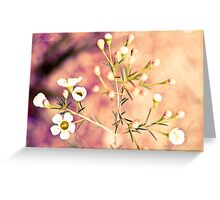 Wildflowers Geraldton Wax Australian souvenir fine art. Greeting Card