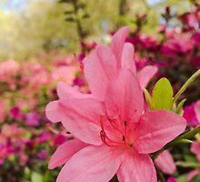Spring Azaleas by Ludwig Wagner