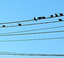 Doves online by MarkusTheLion