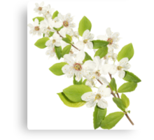 MANY WHITE FLOWERS Canvas Print