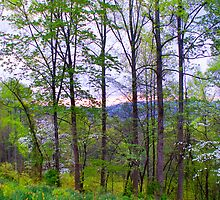 Spring Woods by Nicole  McKinney
