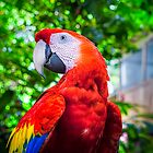 Parrot Wants a Close up! - Scarlet Macaw by Mark Tisdale
