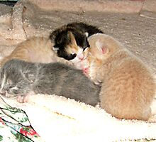 Foster Kittens - 5 Days Old by Jane Neill-Hancock