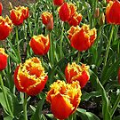 Punk Tulips by John Thurgood