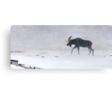 Algonquin Moose - Bull Moose Canvas Print