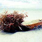 Seashells by the Seashore by bostonrache