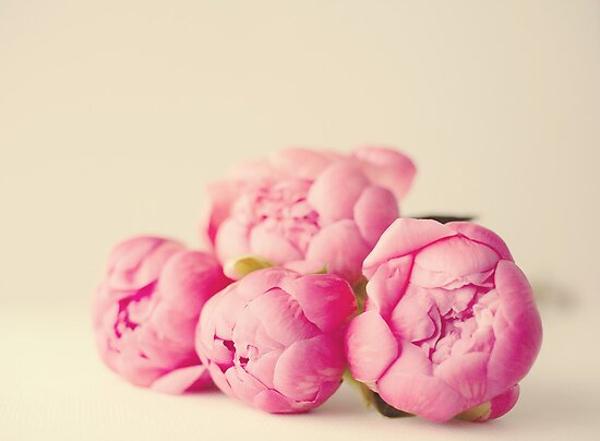 Peonies by Nicola  Pearson