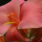macro petals by Alison Hill