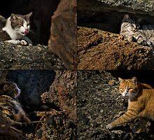 Feral cats of Rainbow Harbor by Celeste Mookherjee