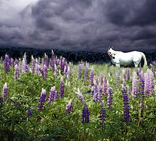 Lupine Dreams, The White Horse by Wayne King