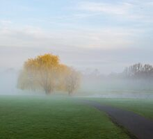 Soft Willow Morning by Dennis Maida