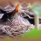 Nesting Bird by ElsT