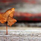Standing Leaf by Alex Boros