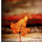 Standing Leaf by Alex Boros