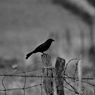 Bird on a wire by Matthew Reed