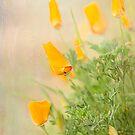 California Poppy by Marilyn Cornwell