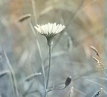 Summer Breeze by lisapowell
