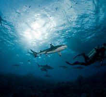 Swimming with Sharks by Valerija S.  Vlasov