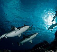 Sharks by Valerija S.  Vlasov
