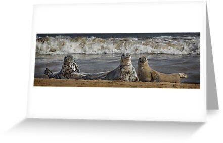 Three Atlantic Grey Seals by Patricia Jacobs CPAGB LRPS BPE3