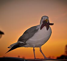 Bird with starfish in mouth by atitsince82