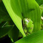 Dirty Little Froggy by WildestArt