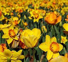 Spring Yellow by Terri~Lynn Bealle