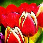 Rainbow Tulips by buttonpresser