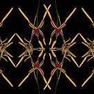 Reaching Spider Orchid Mirror Design Western Australia by Leonie Mac Lean