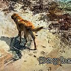 Dog beach by Fernando Fidalgo